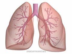سلول های بنیادی ریه برای درمان بیماری های مزمن و یا عفونی ریه