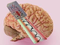 رشد بافت مغزی دارای عملکرد در ساختارهای سه بعدی