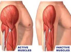 استفاده از iPSCها برای تصحیح موتاسیون های ژنی که موجب دیستروفی عضلانی می شوند