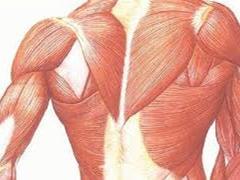 یافتن پروتئینی که سبب تقویت رشد عضلات آسیب دیده می شود